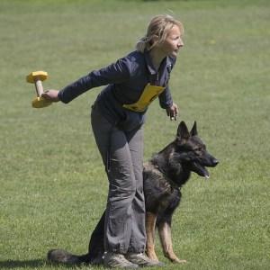 Apportable dressage chien «Cours de formation» pour RCI